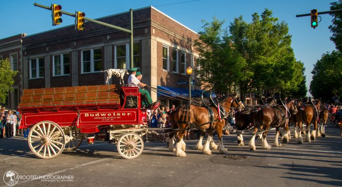 10. Horse and Carriage Tour, New Bern