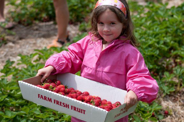 5. Ellsworth Hill Orchard & Berry Farm (Sharon)
