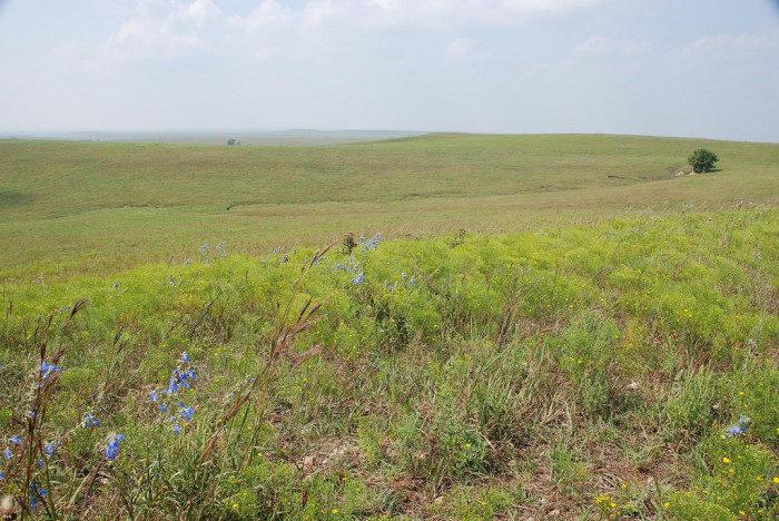 Kansas: Tallgrass Prairie National Preserve