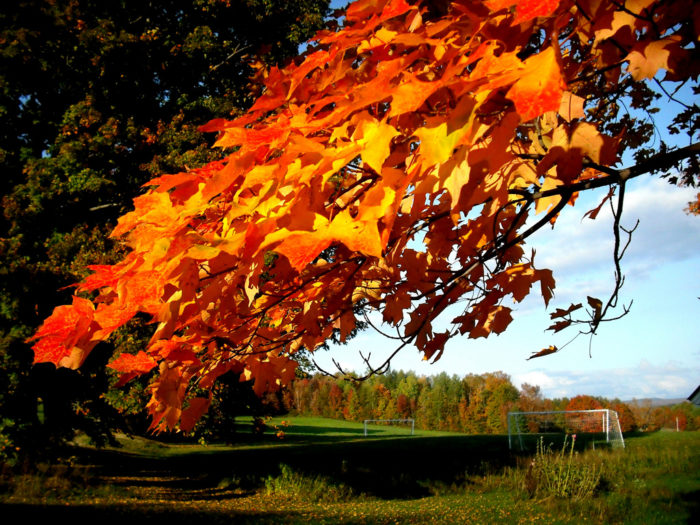 14.  Reds, oranges and yellows of fall.