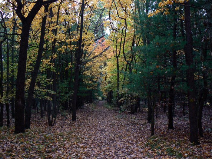 11. Ohio: Oak Openings Preserve Metropark