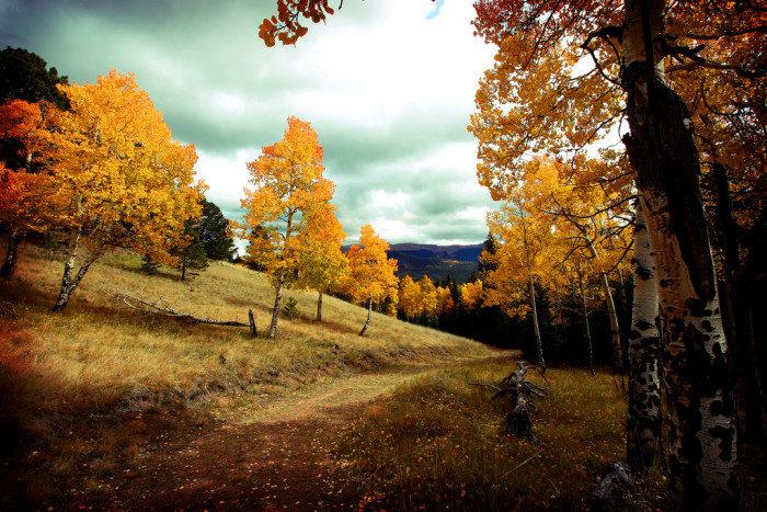 Colorado: Mueller State Park