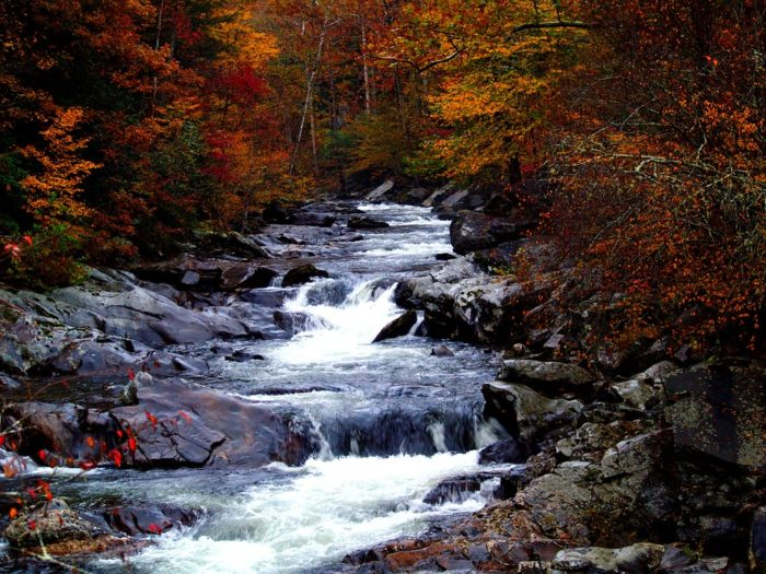 3. Go camping in the Great Smoky Mountains.