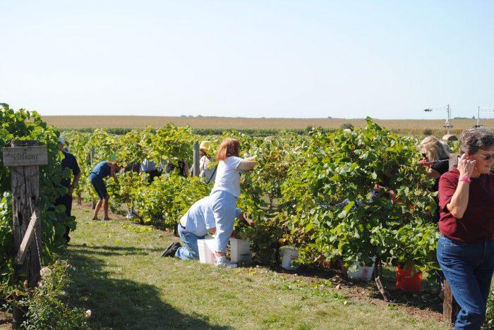 5. Schade Vineyard & Winery in Volga
