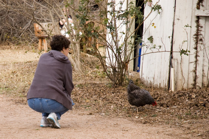 14. Hang out with the chickens at Boggy Creek Farm.