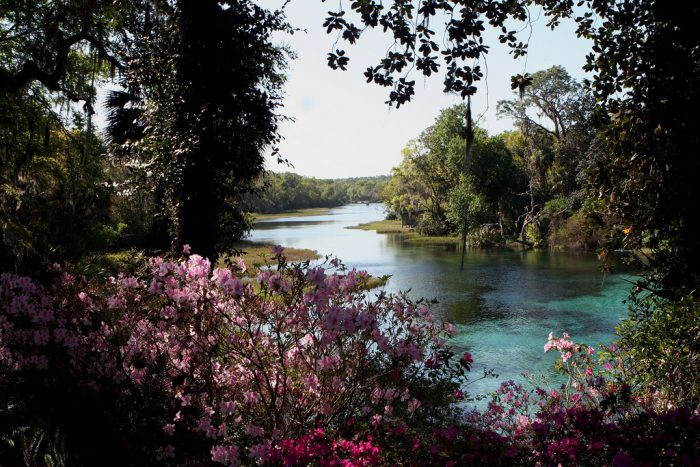 8. Our springs are some of the prettiest places in the world.