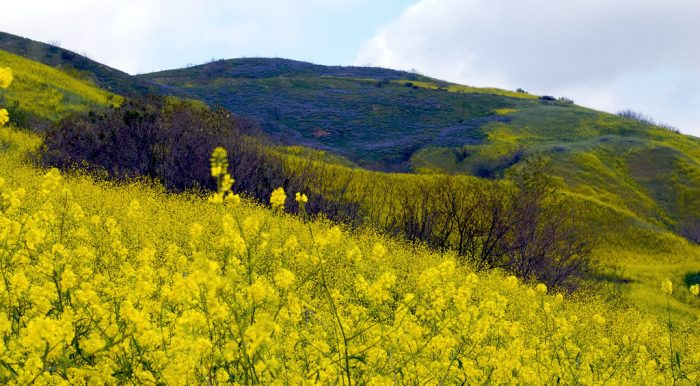 13. Can't get enough of the fields of wildflowers that bloom every spring in brilliant bursts of color.