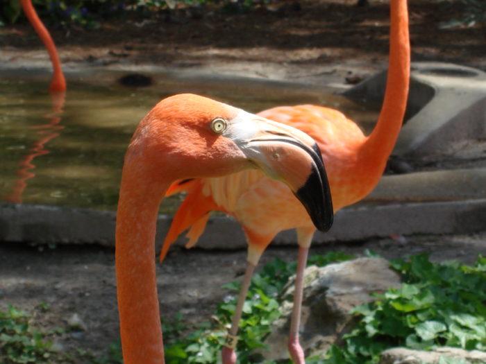 9. Salisbury Zoo