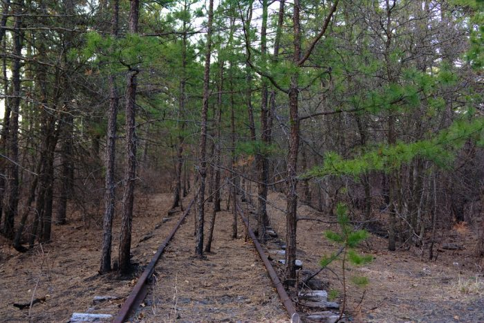 8. The Pine Barrens, Southern New Jersey