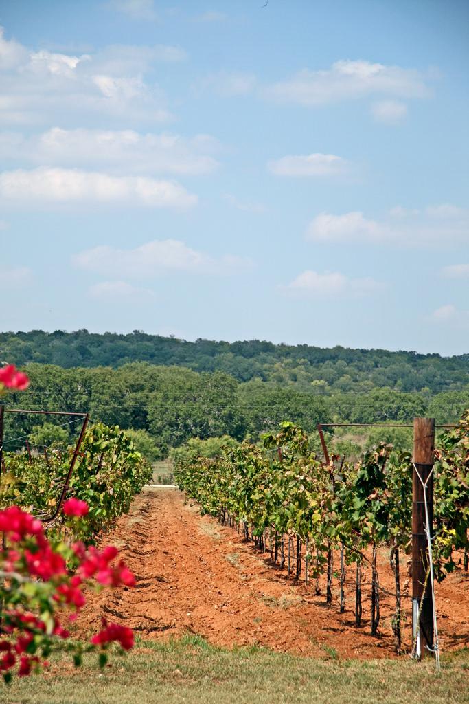 10. Visiting a vineyard