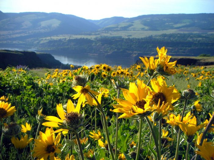 13. Wander through wildflowers on the beautiful Rowena Crest.