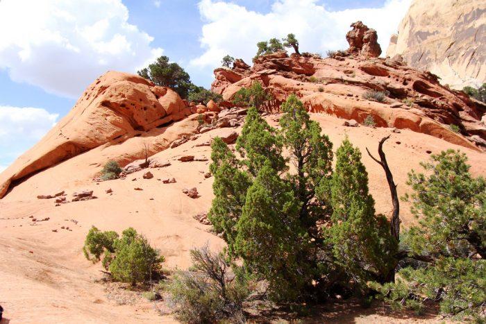 8. Upper Muley Twist Canyon