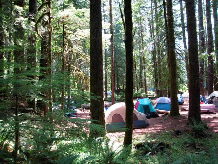 12. Staircase Campground (Olympic National Park)
