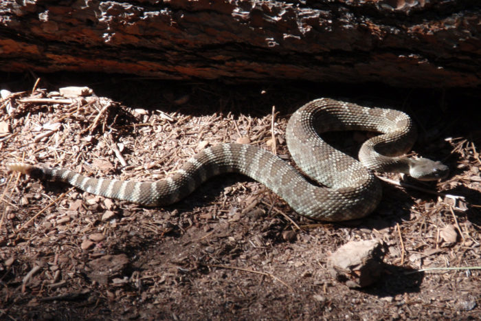 2. You're casual about rattlesnakes.