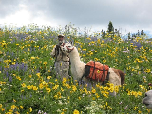 Wyoming: Llama Trekking At Wind River Range