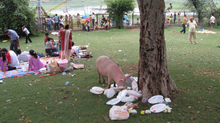5) You can't feed your pigs any uncooked garbage. (Jefferson Parish Sec. 7-187)