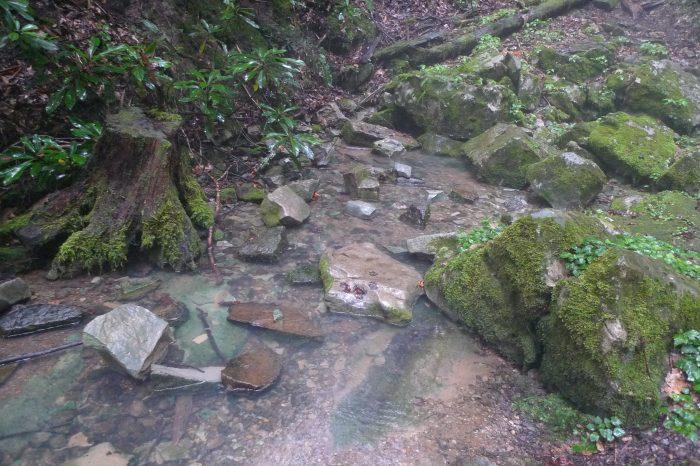 2. Cave Springs (Dryden)