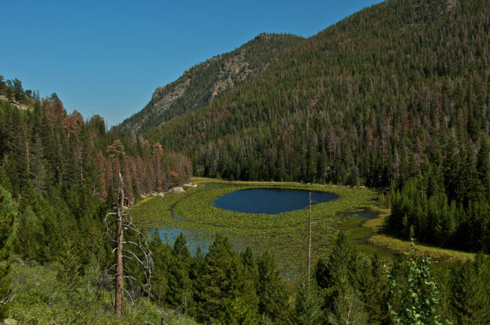 3. Cub Lake Trail