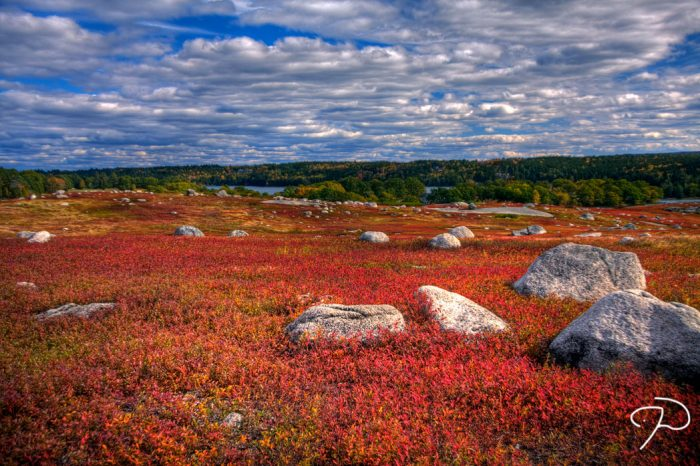 5. The Blueberry Barrens, Washington County