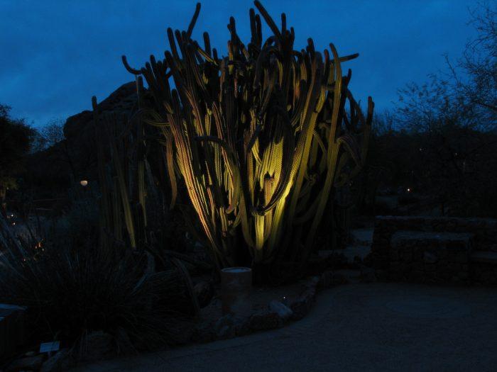 4. Participate in an evening flashlight tour at the Desert Botanical Garden.