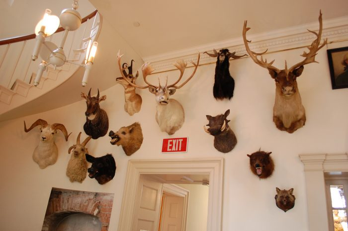 1. Museum of Natural and Other Curiosities (Old State House, Hartford)