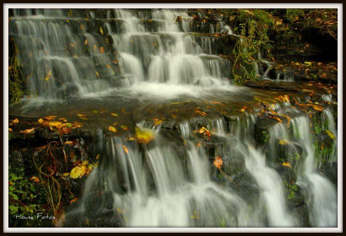 4. Dogwood Canyon Nature Park