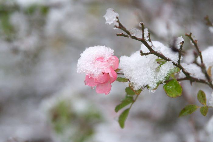 8.  Planning around spring weather.