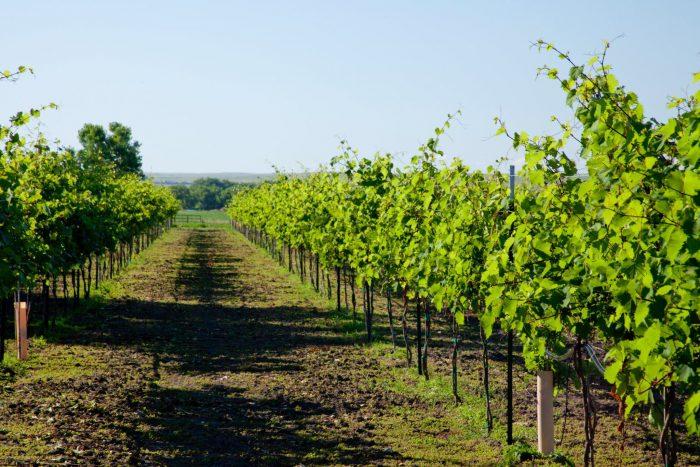 7. Belle Joli' Winery in Sturgis and Deadwood