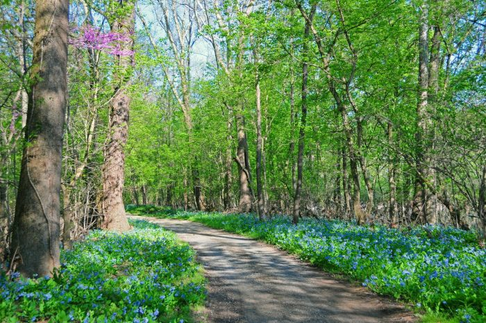 7. This enchanting towpath along the C&O Canal is generously sprinkled with wildflowers.