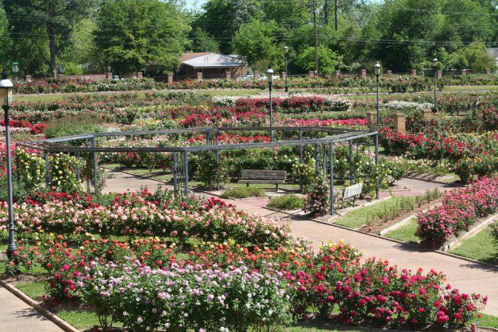5. Tyler Rose Gardens (Tyler)