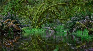 This Underrated Rainforest Might Just Be The Most Beautiful Place In Washington