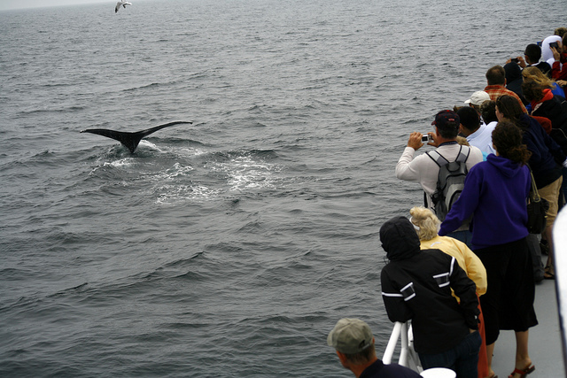15. Whale Watching