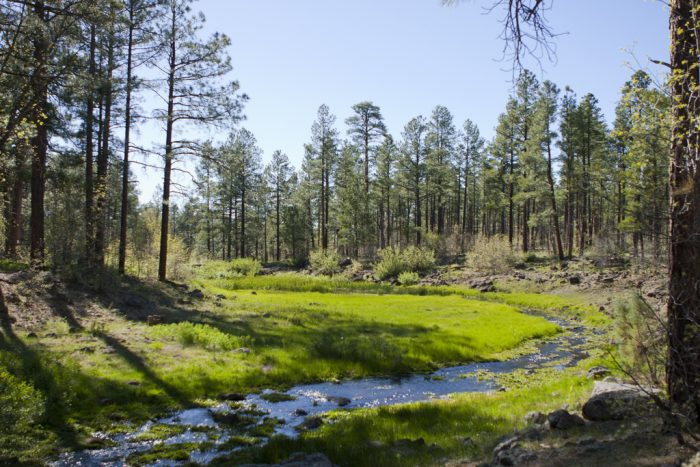 10. Springs Trail #633, Pinetop