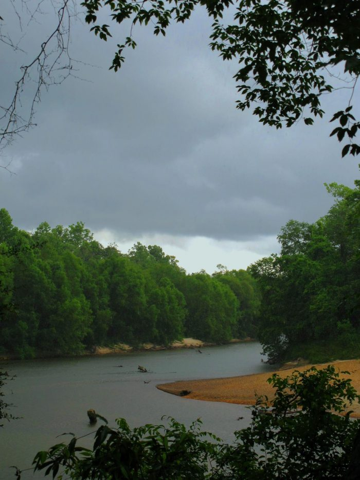 Bogue Chitto State Park is definitely one of the most spectacular places to go swimming in the greater New Orleans area.