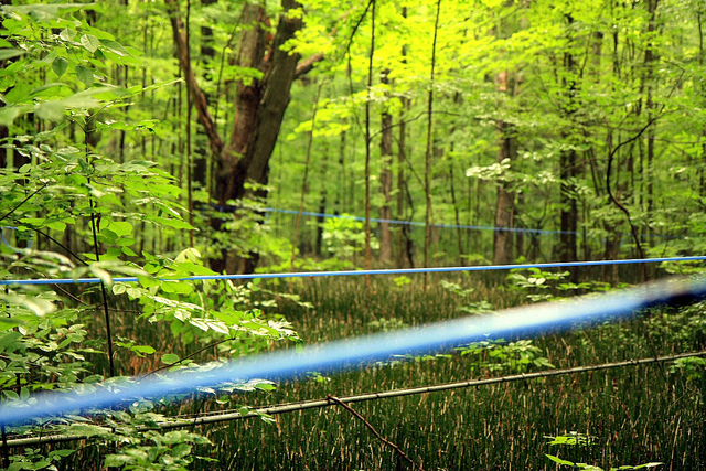 9. Do you know why these lines are running through the woods?