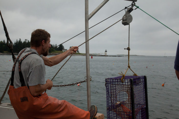 8. Catching lobster.