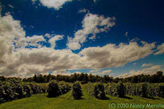 8.  Vineyards of Vermont.