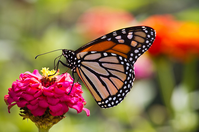 1. The people of Providence were recently ranked the most attractive in America according to Travel + Leisure. That pretty much means all of us Providence residents are beautiful butterflies.