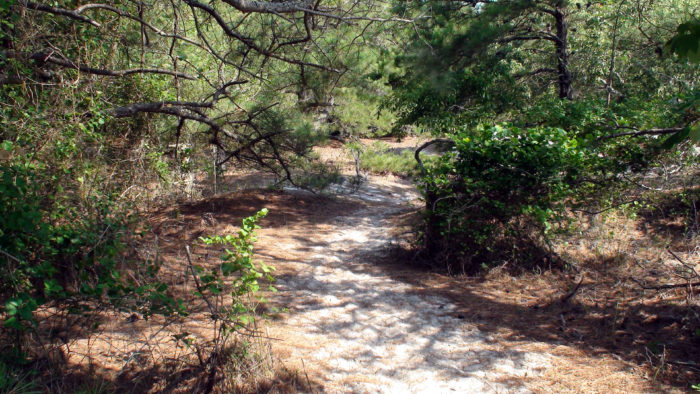8. Many people also aren't aware that Assateague has three short hiking trails, including one that goes through a surprising wooded area. So many types of terrain here.