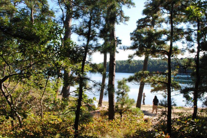 4. Nickerson State Park, Brewster