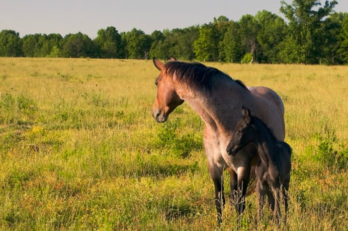 13. In this sweet photo, a mother is protecting her foal.