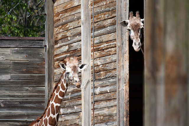 3. Fort Wayne Zoo - Fort Wayne