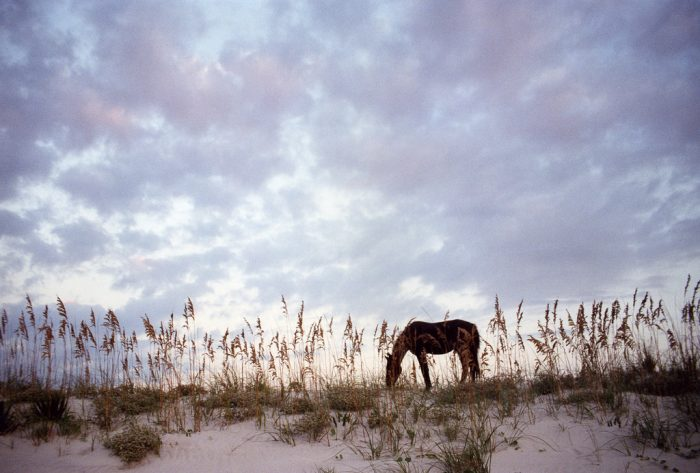 20. See what it's like to observe horses in the wild on Cumberland Island.