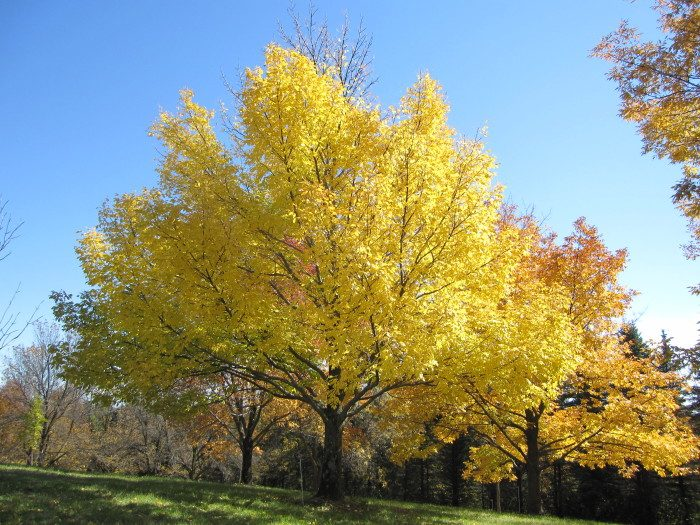 5. You can also head to the Minnesota Landscape Arboretum for even more fabulous scenery.