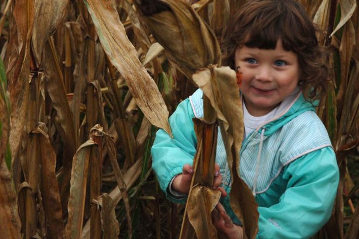 2. Played hide-and-seek in a cornfield with your cousins.