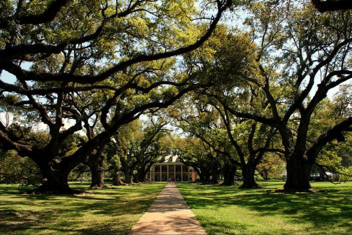 3. Oak Alley Plantation