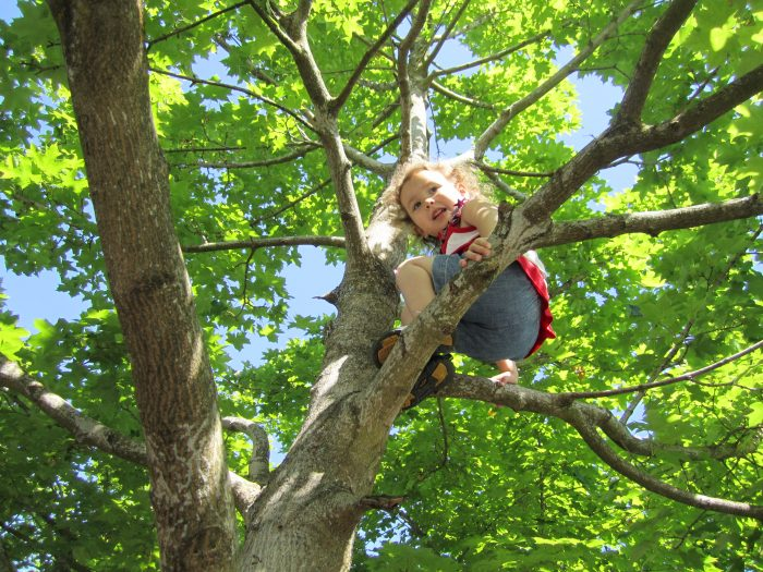 6. This meant more time for climbing trees...