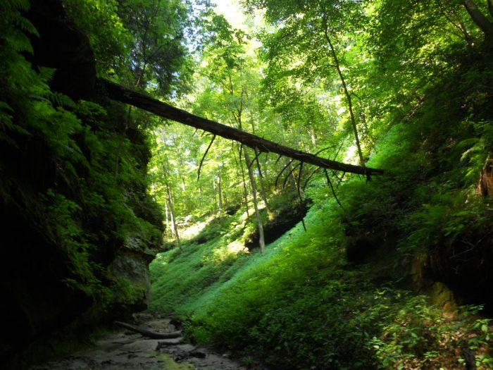 7. Adventure through beautiful Turkey Run State Park.