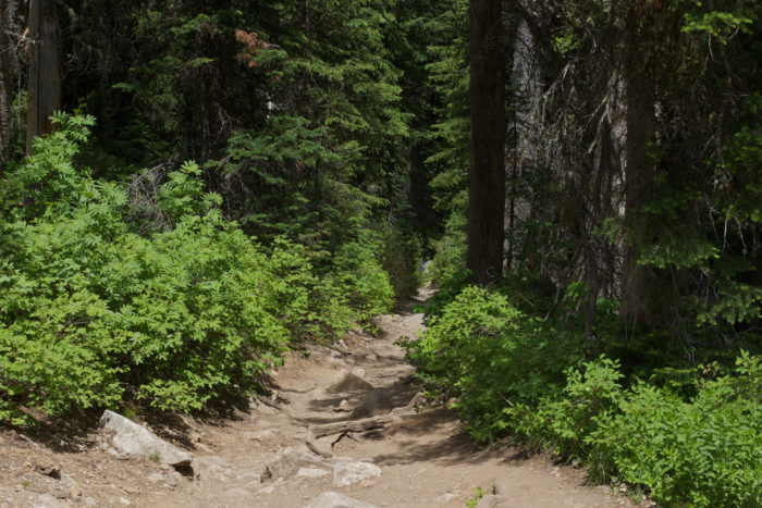 15. There's a good chance you might run into 'Little Red Riding Hood' along this trail near Inspiration Point in Yellowstone.