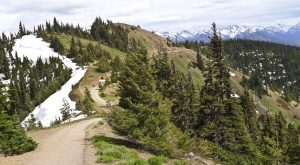 Here's Washington's Top Outdoor Attraction…And You'll Definitely Want To Do It